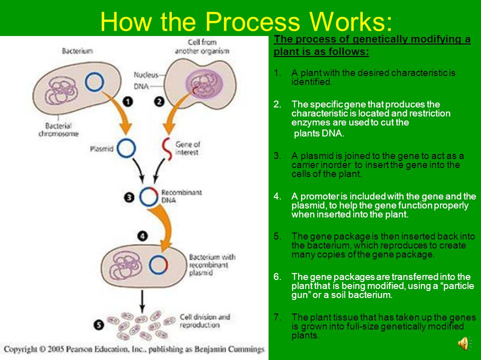 How the Process Works: The process of genetically modifying a