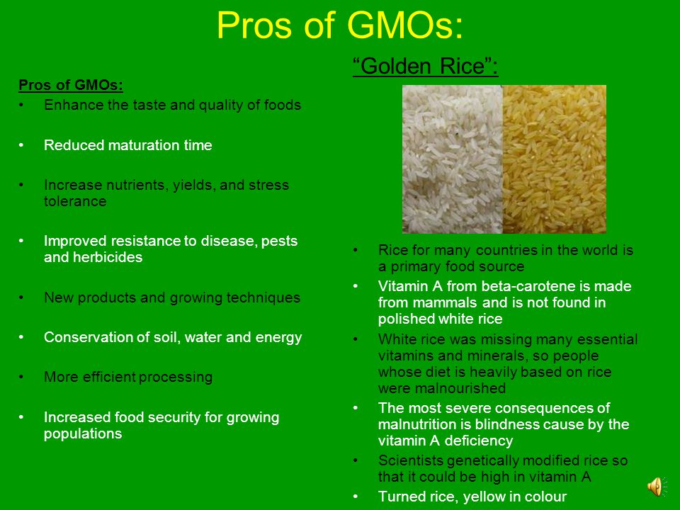 Pros of GMOs: Golden Rice : Pros of GMOs: