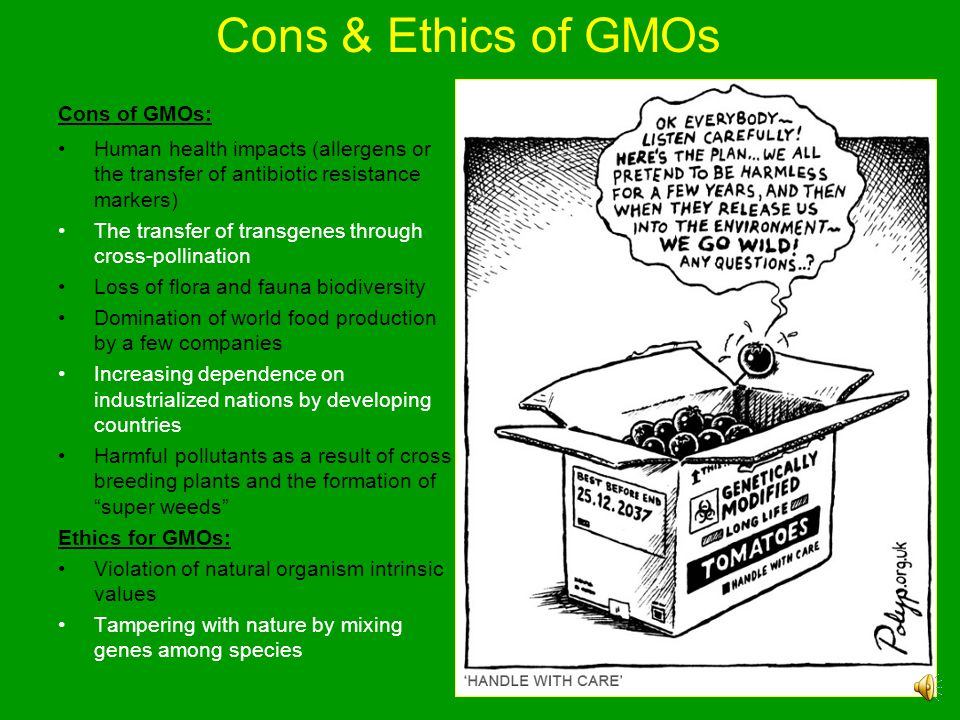 Cons & Ethics of GMOs Cons of GMOs:
