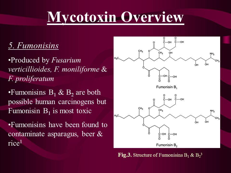 Mycotoxin Overview 5. Fumonisins