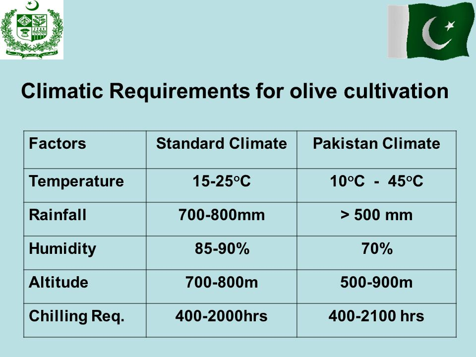 Climatic Requirements for olive cultivation