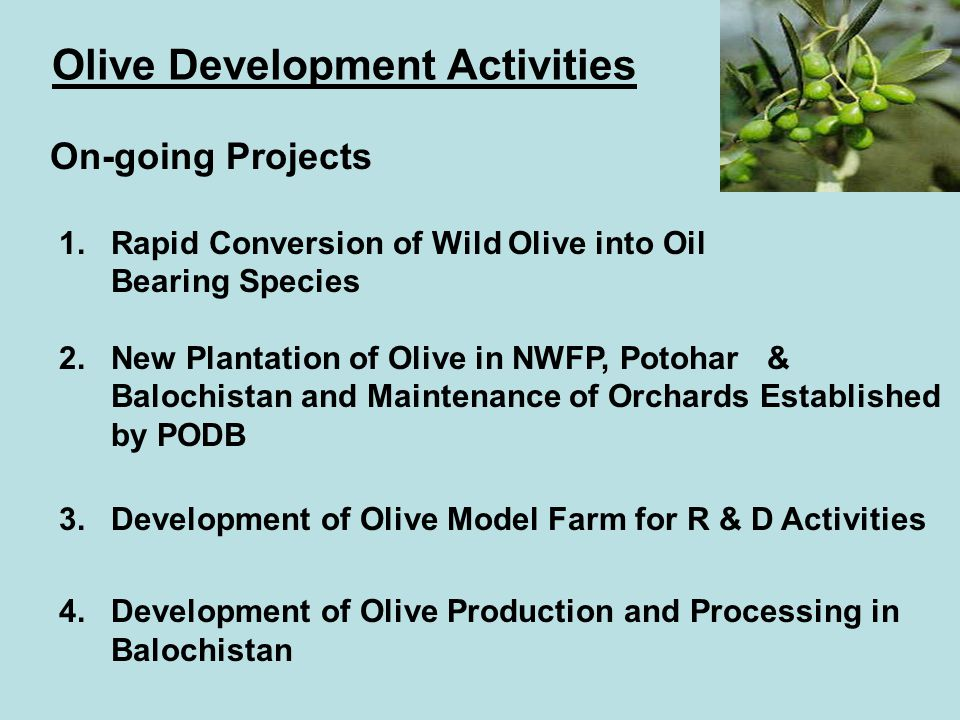 Olive Development Activities