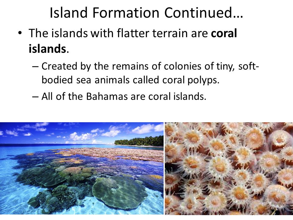 Island Formation Continued…