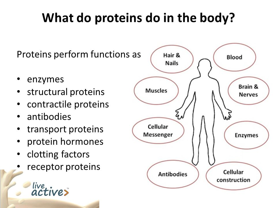 What do proteins do in the body
