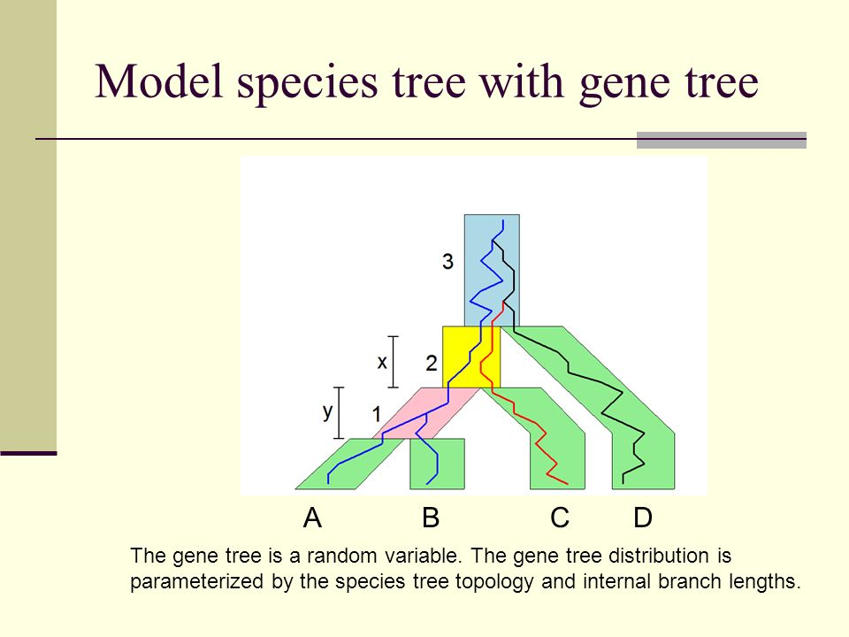 Model species tree with gene tree