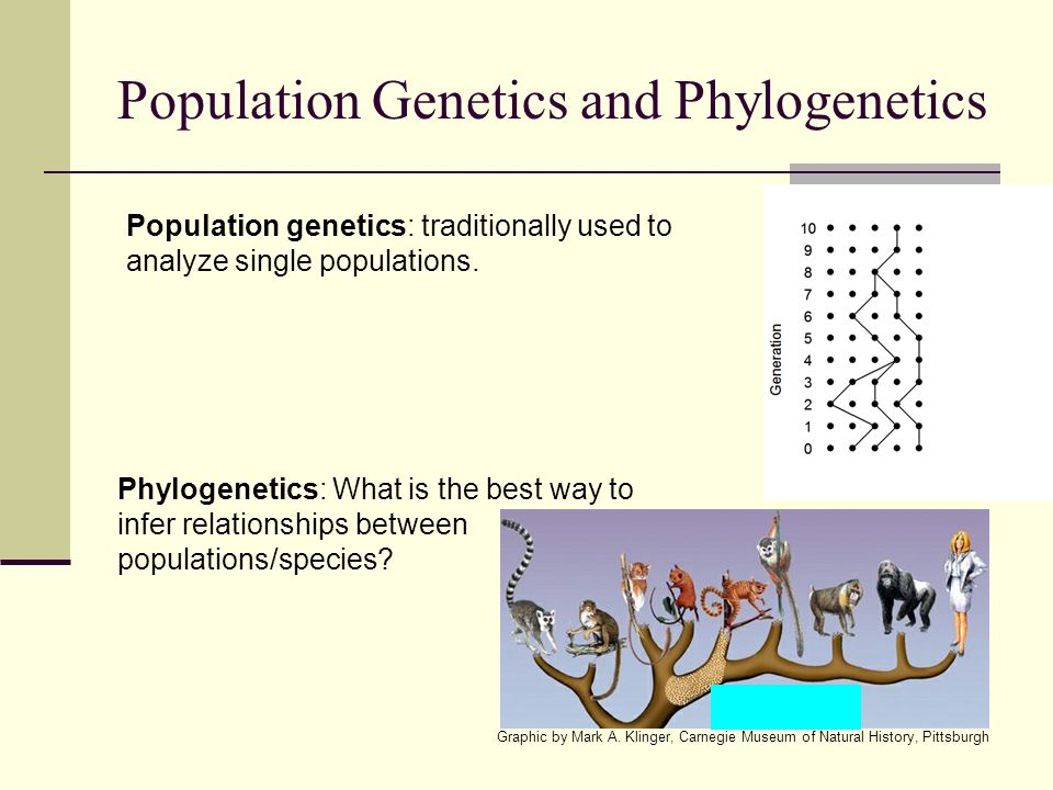 Population Genetics and Phylogenetics