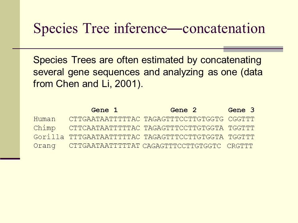 Species Tree inference—concatenation