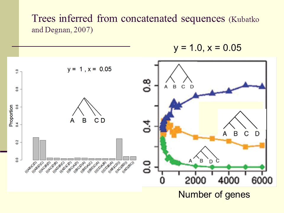 Trees inferred from concatenated sequences (Kubatko and Degnan, 2007)