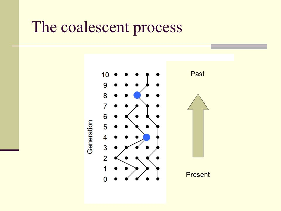 The coalescent process