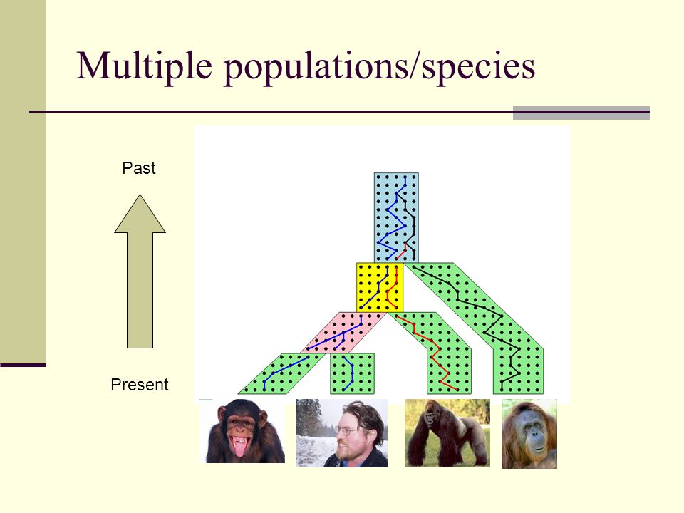 Multiple populations/species