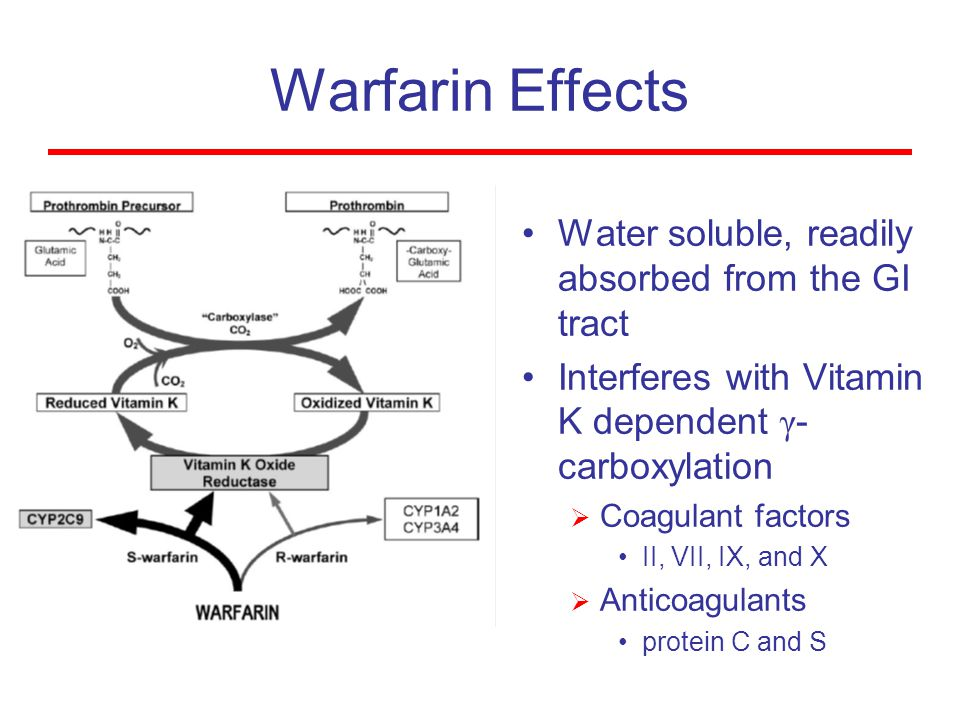 Warfarin Effects Water soluble, readily absorbed from the GI tract
