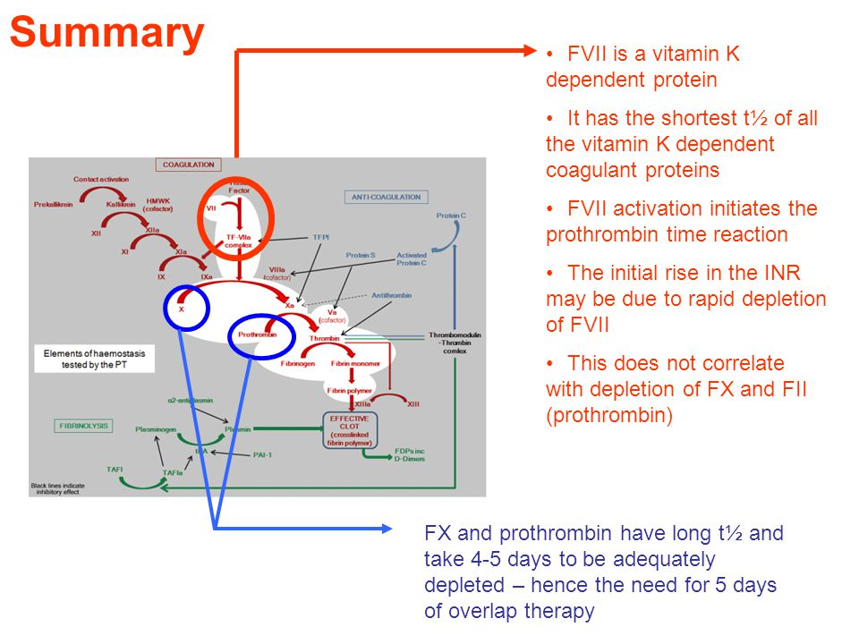 Summary FVII is a vitamin K dependent protein