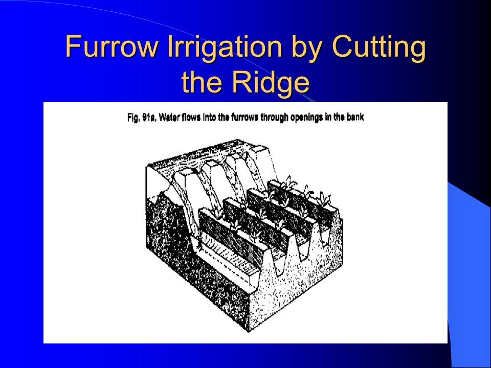 Furrow Irrigation by Cutting the Ridge