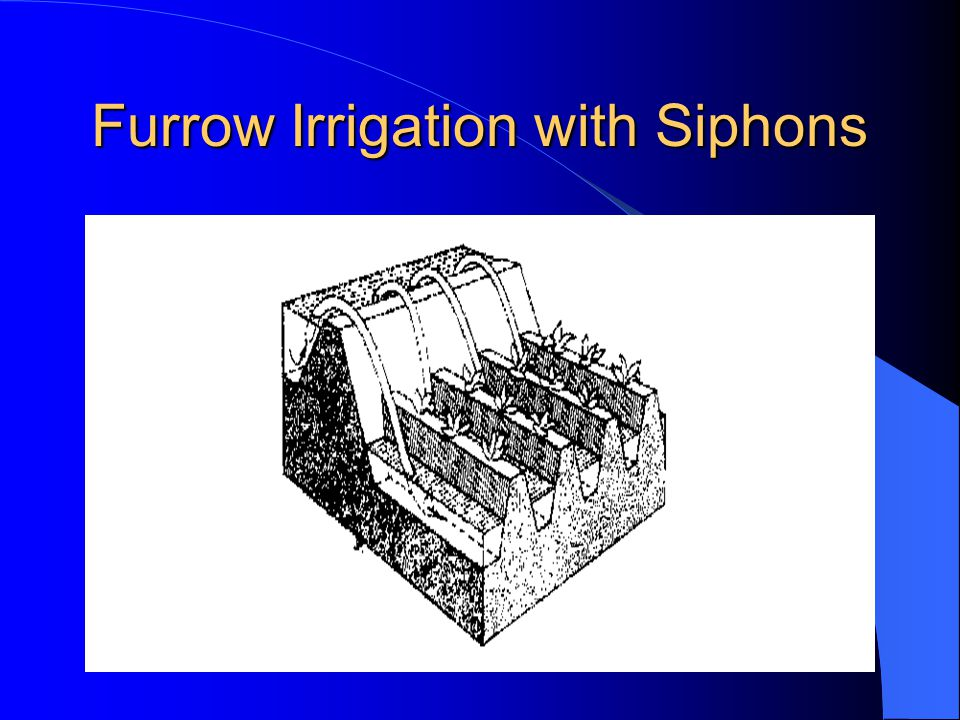 Furrow Irrigation with Siphons