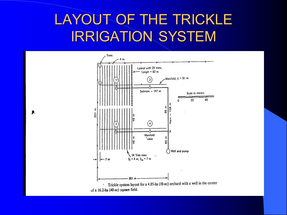 LAYOUT OF THE TRICKLE IRRIGATION SYSTEM