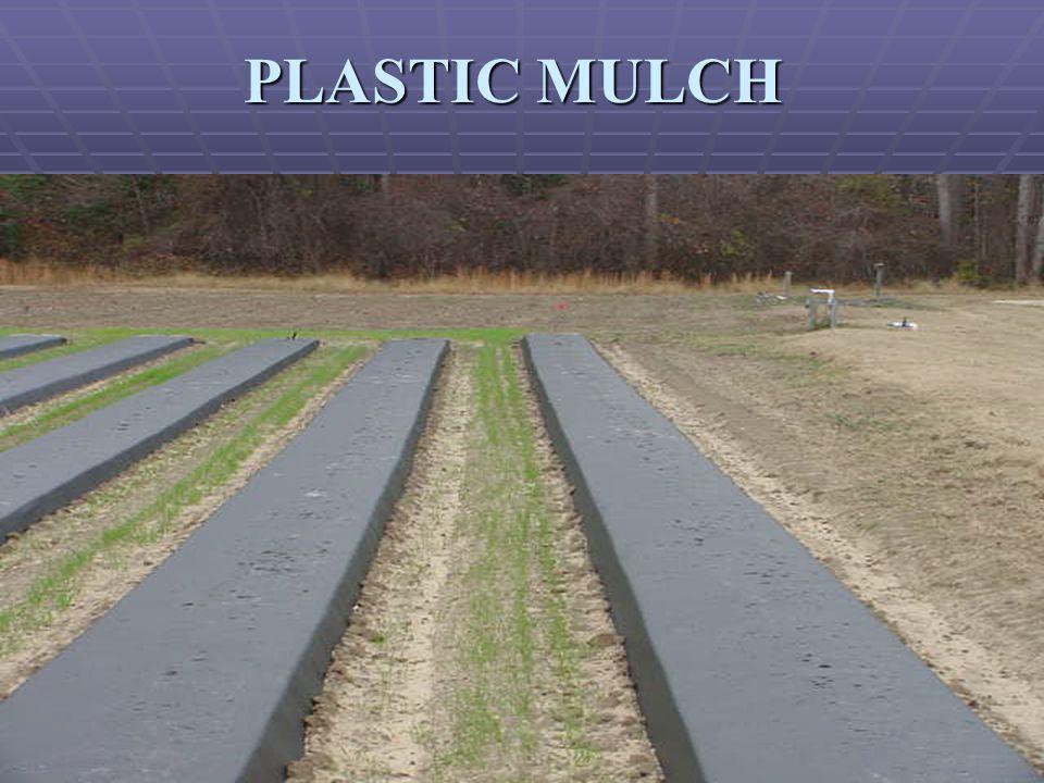PLASTIC MULCH