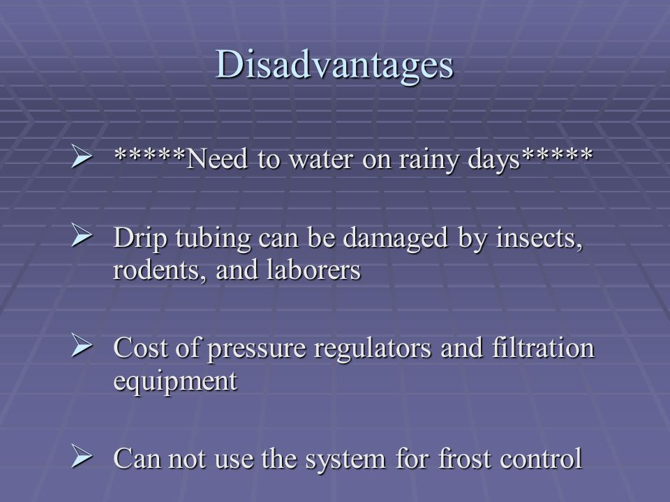 Disadvantages *****Need to water on rainy days*****