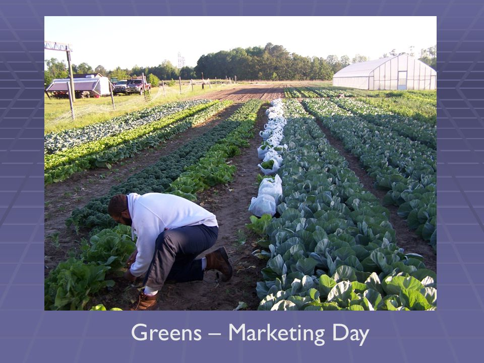 Greens – Marketing Day