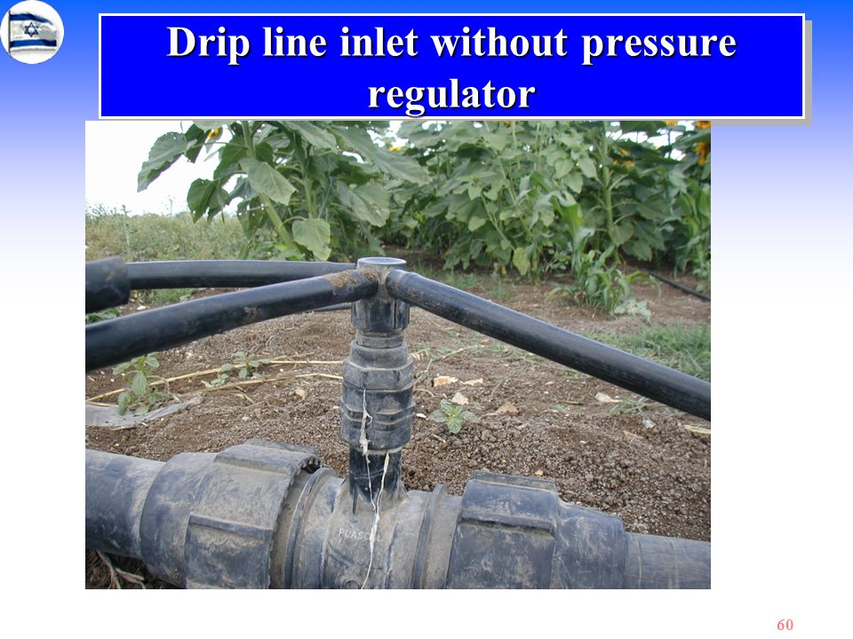 Drip line inlet without pressure regulator