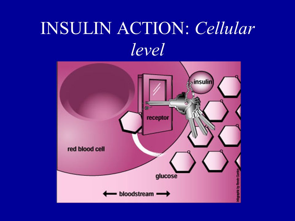 INSULIN ACTION: Cellular level