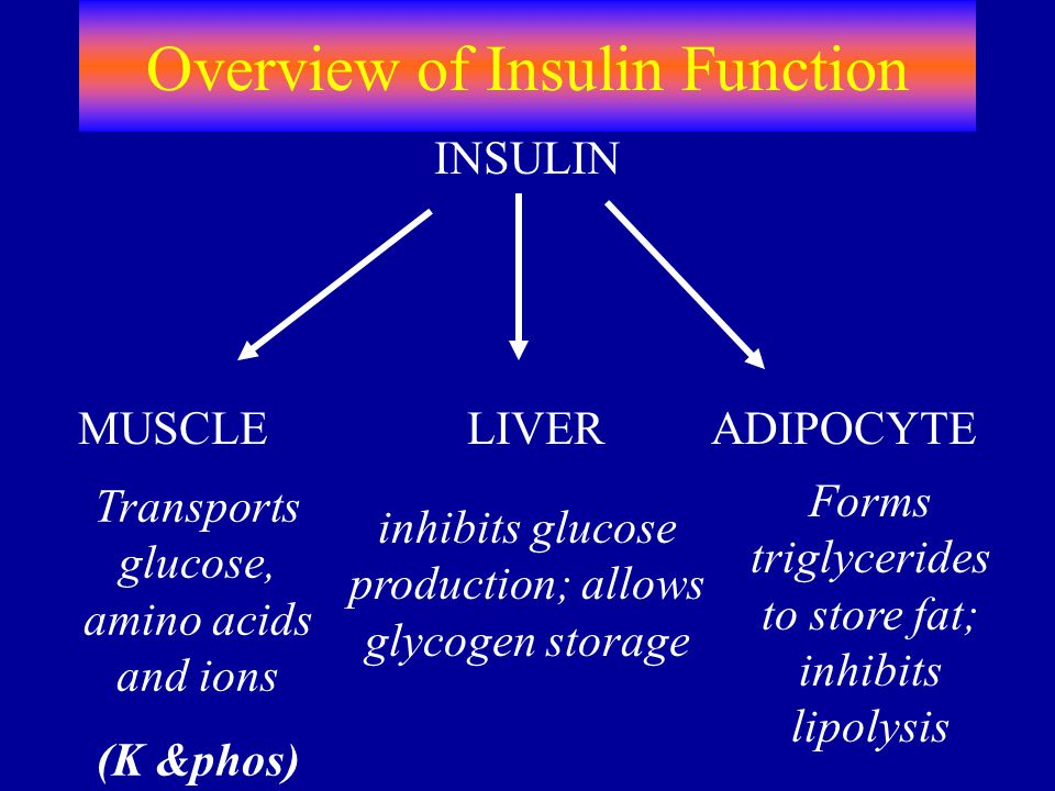 Overview of Insulin Function