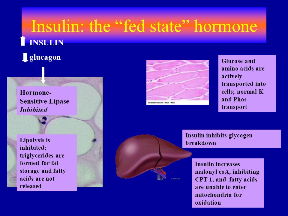 Insulin: the fed state hormone