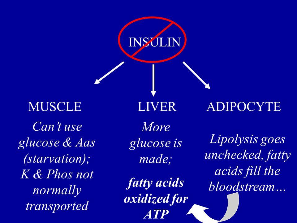 fatty acids oxidized for ATP