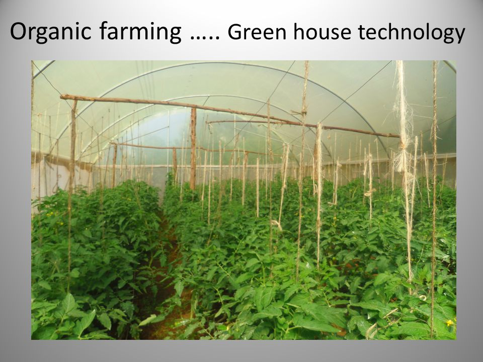 Organic farming ….. Green house technology