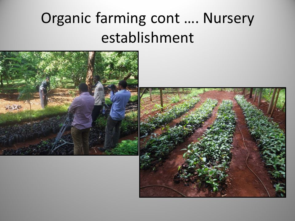 Organic farming cont …. Nursery establishment