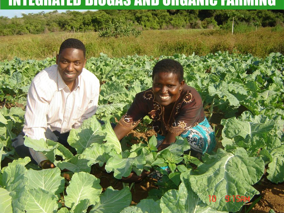 INTEGRATED BIOGAS AND ORGANIC FARMING
