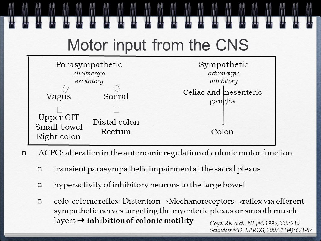 Motor input from the CNS