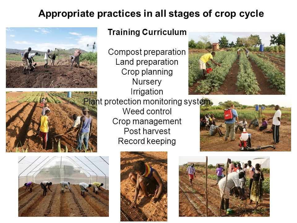 Appropriate practices in all stages of crop cycle