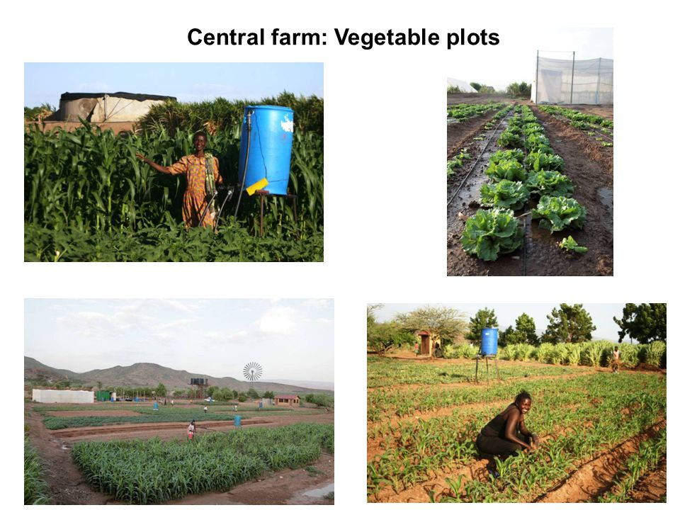 Central farm: Vegetable plots