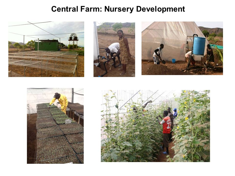 Central Farm: Nursery Development