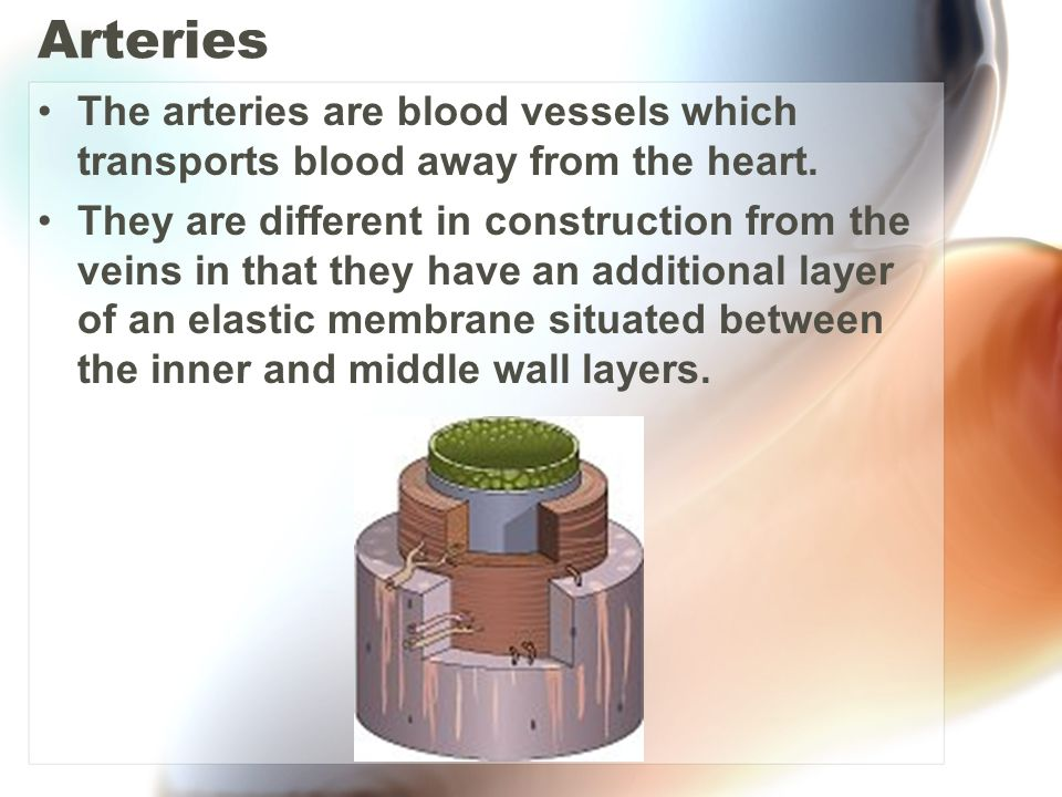 Arteries The arteries are blood vessels which transports blood away from the heart.