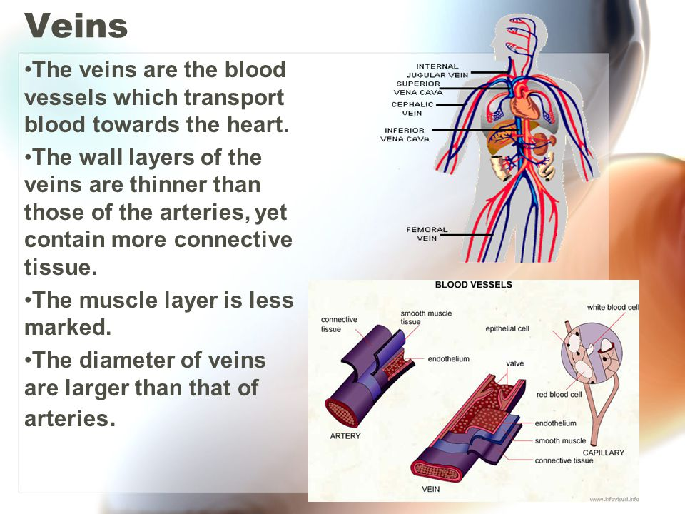 Veins The veins are the blood vessels which transport blood towards the heart.