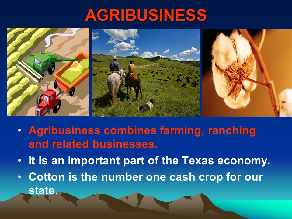AGRIBUSINESS Agribusiness combines farming, ranching and related businesses. It is an important part of the Texas economy.