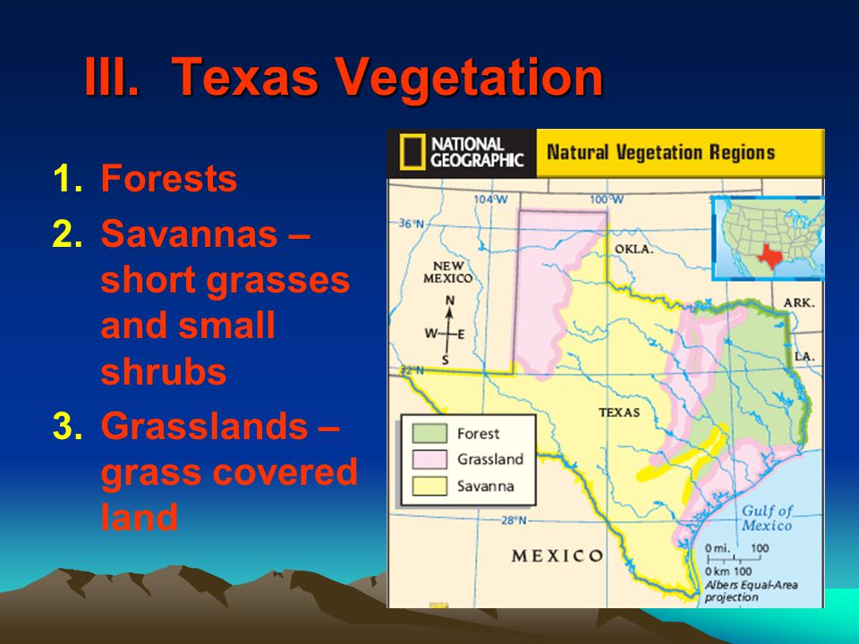 III. Texas Vegetation Forests
