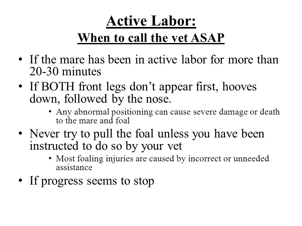 Active Labor: When to call the vet ASAP