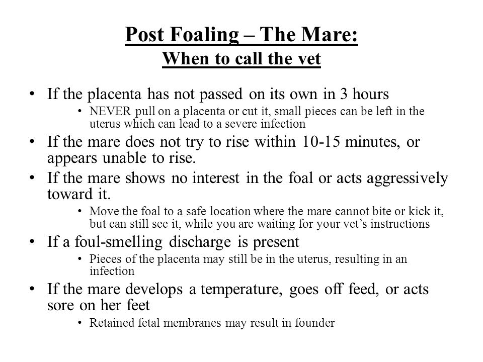 Post Foaling – The Mare: When to call the vet