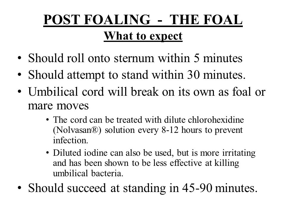POST FOALING - THE FOAL What to expect
