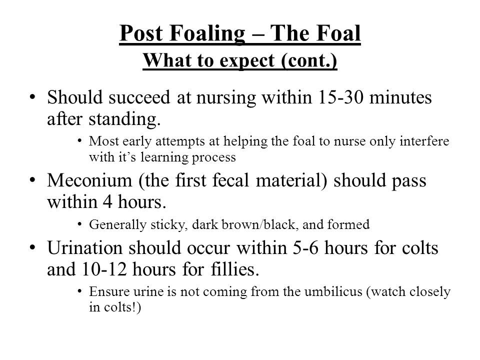 Post Foaling – The Foal What to expect (cont.)