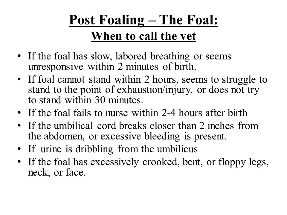 Post Foaling – The Foal: When to call the vet