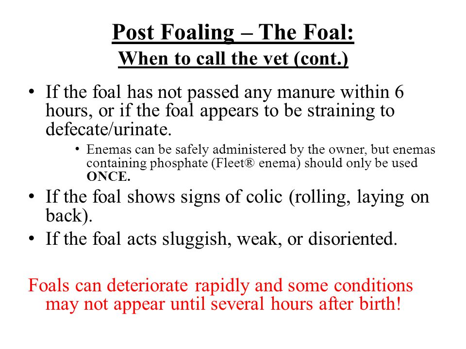 Post Foaling – The Foal: When to call the vet (cont.)
