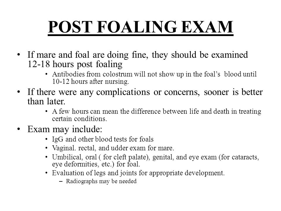 POST FOALING EXAM If mare and foal are doing fine, they should be examined 12-18 hours post foaling.