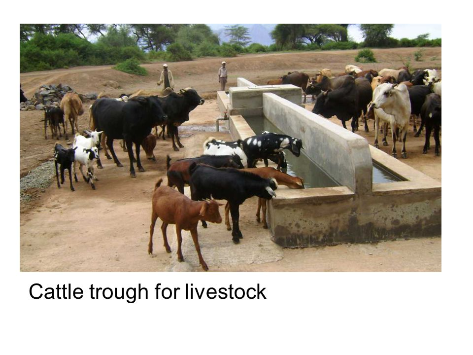 Cattle trough for livestock