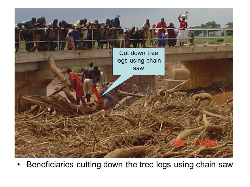 Cut down tree logs using chain saw