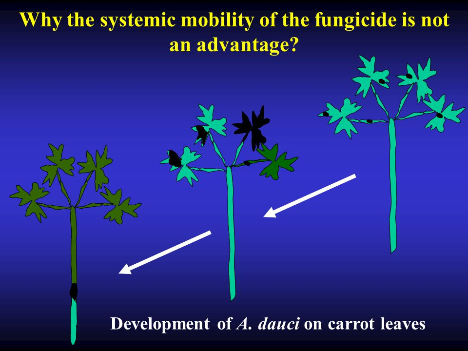 Why the systemic mobility of the fungicide is not an advantage