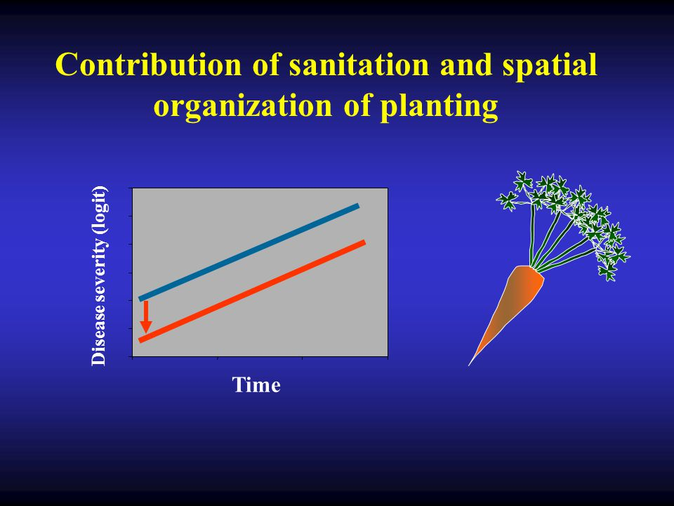 Contribution of sanitation and spatial organization of planting