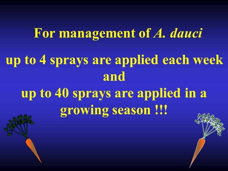 For management of A. dauci